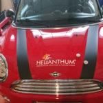 Fahrzeugbeschriftung auf einem Mini
